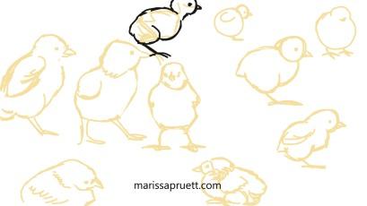 chicks practice